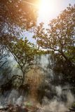 The smoke from the fire in the jungle. The sun in the sky and rays make their way through the trees. Hot tropical climate caused a. Fire royalty free stock images