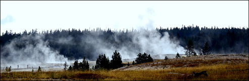 Smoke Without Fire. Smoke Rising from Geysers in Yellow Stone National Park Royalty Free Stock Photography
