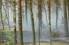 Smoke and fire in the wood. Smoke from a fire in the wood on coast of lake Deep, near to Vyborg. Russian Federation Royalty Free Stock Images