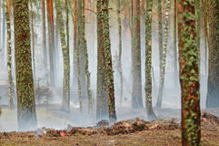 Smoke and fire in the wood Royalty Free Stock Photos