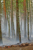 Smoke and fire in the wood. Smoke from a fire in the wood on coast of lake Deep, near to Vyborg. Russian Federation Royalty Free Stock Photography