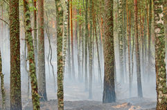 Smoke and fire in the wood Stock Photo