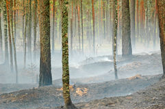 Smoke and fire in the wood Royalty Free Stock Images