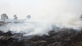Smoke and flames occur from agriculturist Stubble burning rice straw stock video
