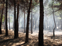 Smoke in forest. Smoke from a fire in forest Royalty Free Stock Image