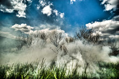 Smoke in the forest. Under the blue sky Stock Photo