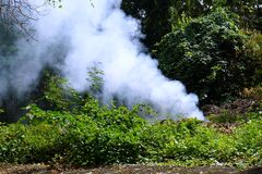 Smoke in the forest Stock Photography