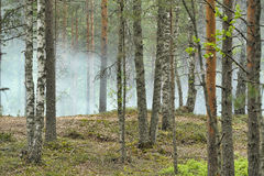 Smoke in the forest Royalty Free Stock Photography