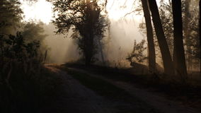 Smoke from forest fire moving with wind. Forest road, trees, sunset, sun rays stock video