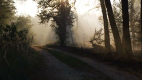 Smoke from forest fire moving with wind. Speed up. Forest road, sunset, sun rays stock footage