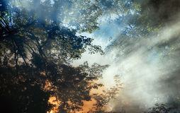 Smoke from a forest fire rises through the trees. Royalty Free Stock Image