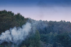 Smoke in the forest Stock Image
