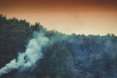 Smoke in the forest Royalty Free Stock Image