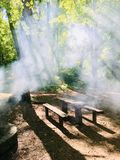 Smoke in forest stock photography