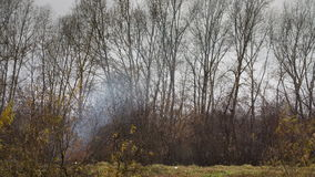 Smoke in the forest stock footage