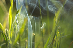 Smoke in the grass Stock Photography