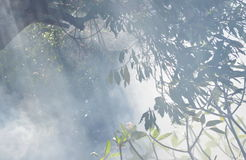 Smoke from leaf burning in garden Royalty Free Stock Photo