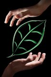 Smoke leaf in hands Royalty Free Stock Image