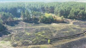 Smoke over forest, wild fire aerial view. Scorched earth and tree trunks after a spring fire in forest