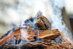 Smoke over woods Stock Image