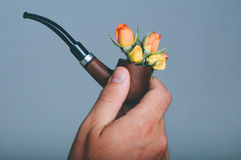 Smoke pipe in male hand with rose flowers Royalty Free Stock Photo