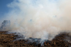 Smoke, after a prescribed fire burn Royalty Free Stock Photos