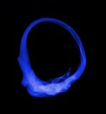 Smoke ring Stock Images
