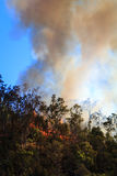 Smoke Rising from Bushfire Royalty Free Stock Photography