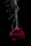 Smoke and Rose. Royalty Free Stock Photo