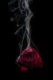 Smoke and Rose. Royalty Free Stock Photo