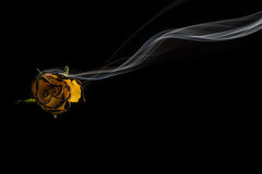 Smoke and Rose. Royalty Free Stock Images