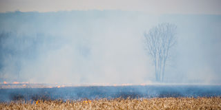 Smoke Shrouds a Tree as Fire Burns Around it. Royalty Free Stock Photos