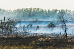 Free Smoke Spreads Over The Scorched Earth From Natural Summer Fires Stock Photo - 98651510