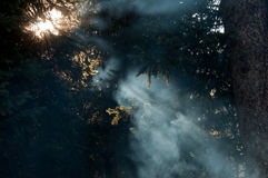 Smoke Sun Beams Sun Rays Campfire Smog Royalty Free Stock Photo