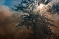 Smoke and Sun Rays Royalty Free Stock Photography