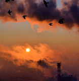 Smoke at sunrise and flying doves. In the air Royalty Free Stock Image