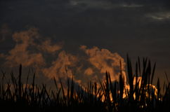 The smoke at sunset. Sun the smoke of the dying day through the silhouette grass stock photos
