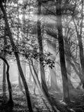 Smoke and tree Stock Photos