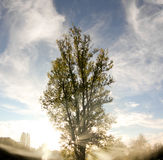Smoke and tree with sun rays Stock Photo