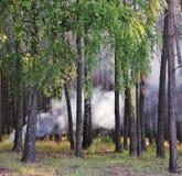 Smoke in wood. Stock Photo