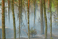Smoke in the wood. Smoke from a fire in the wood on coast of lake Deep, near to Vyborg. Russian Federation Stock Photos