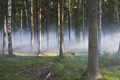 Smoke in the woods. Smoke in a summer forest fire risk Stock Photos