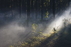 Smoke in the woods. Smoke in a summer forest fire risk Stock Images