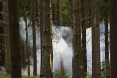 Smoke in the woods Stock Photography