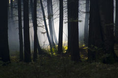 Smoke in the woods. Smoke in a summer forest fire risk Stock Photography