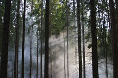 Smoke in the woods. Smoke in a summer forest fire risk Royalty Free Stock Image