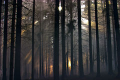 Smoke in the woods. Smoke in a summer forest fire risk Stock Photo