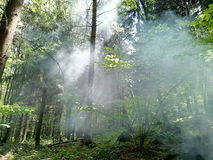 Smoke in the woods Royalty Free Stock Photos