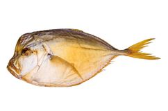 Smoked atlantic moonfish Stock Photography