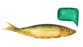 Smoked baltic herring Stock Image
